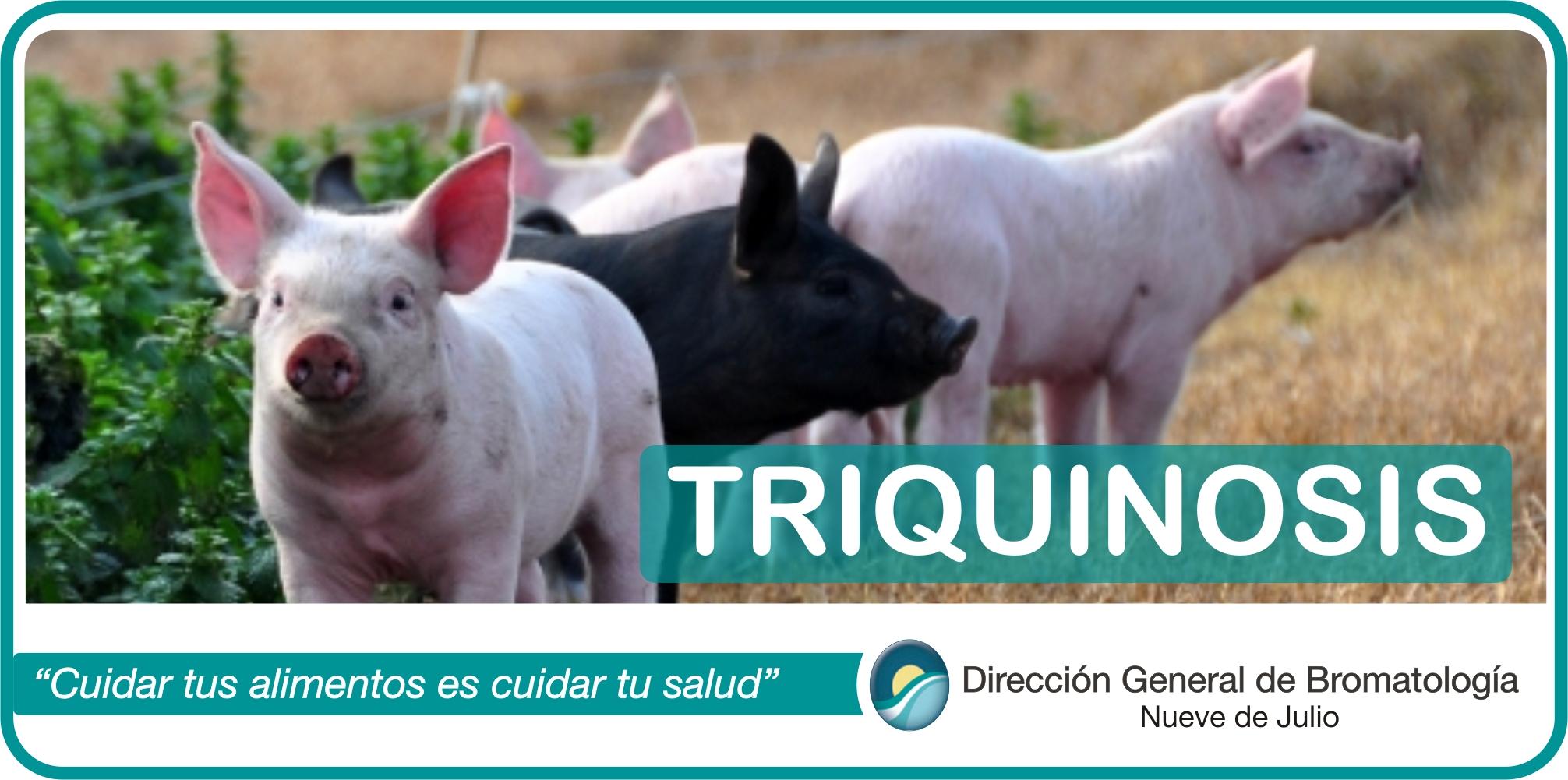 enfermedad triquinosis prevencion